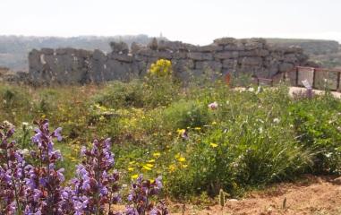 Ggantija, Gozo, Muddy Archaeologist Gillian Hovell